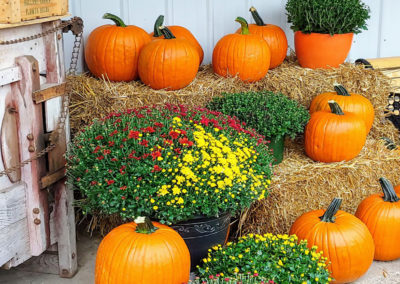 Seasonal Mums and Pumpkins
